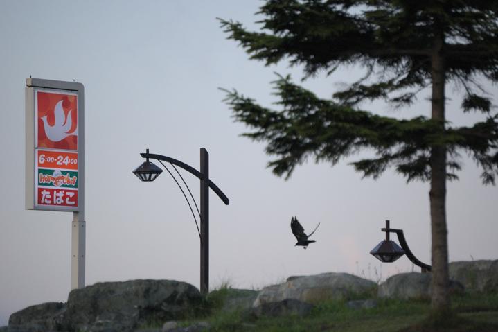 bird-seikomart-s.jpg