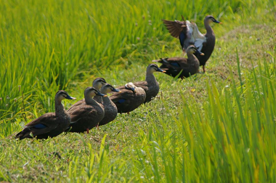 bird-tanbo-summer-s.jpg