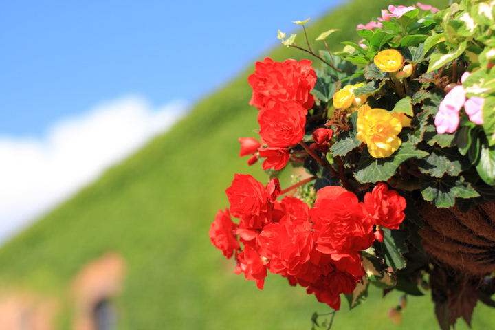 factory-flower.jpg