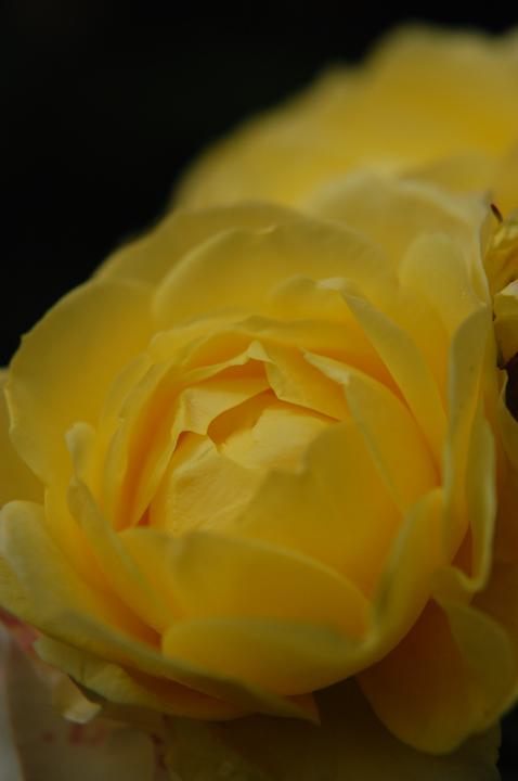 flower_01.jpg