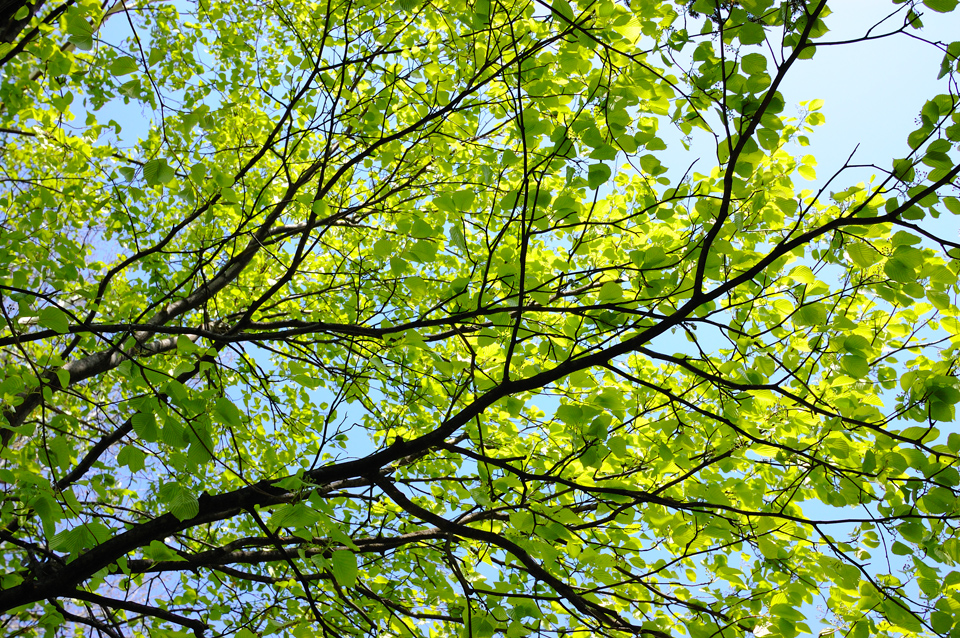 green-leaf-sky-s.jpg