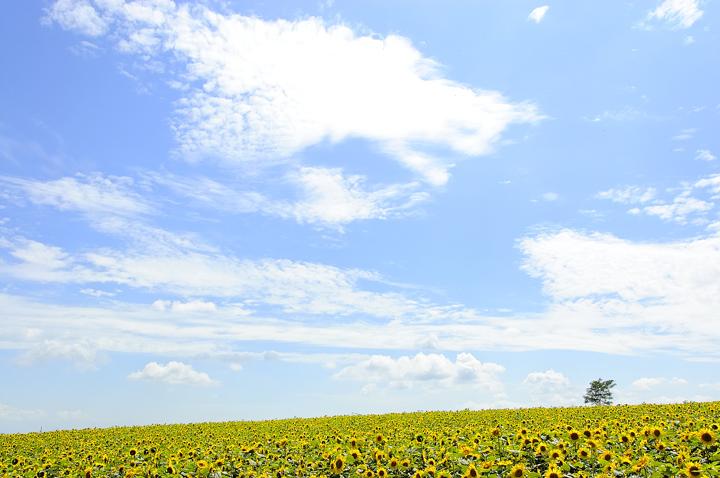himawari-hokuryuu-sky-720.jpg