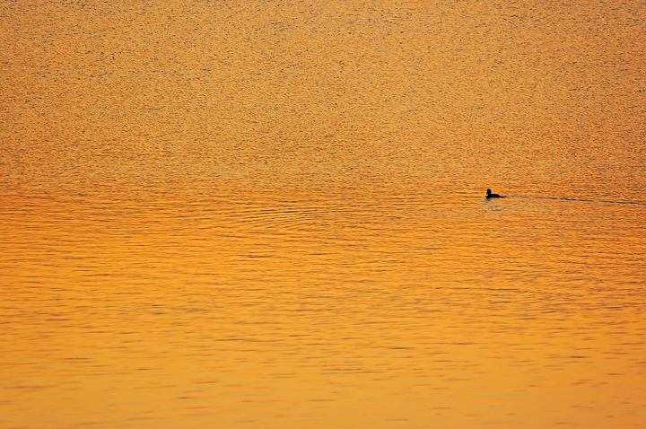 lake-bird.jpg
