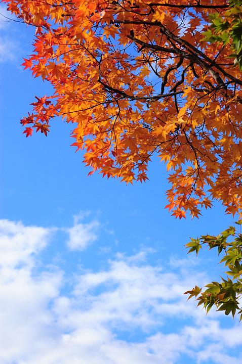 momiji-sky-s.jpg