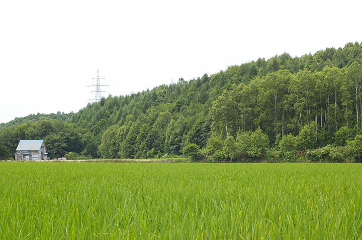 re-no-01-s.jpg