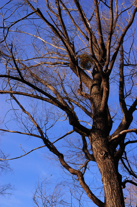 tree-blue-edwindan-park.jpg
