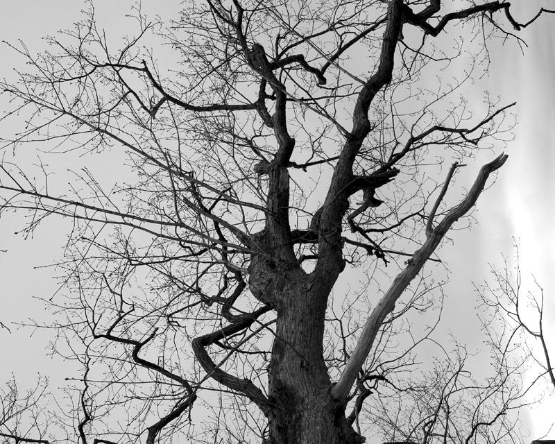 tree-mono.jpg