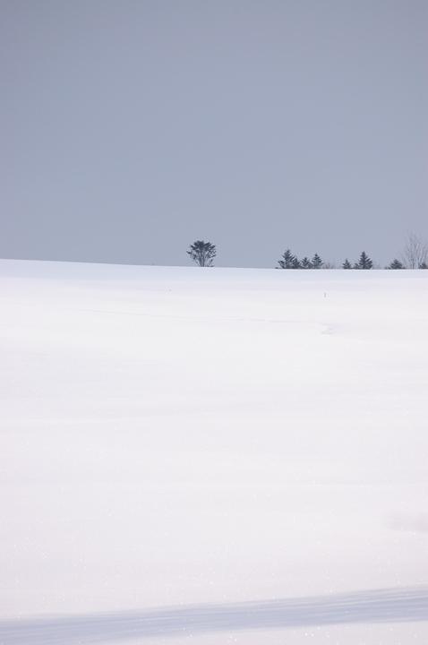 tree-snow-s.jpg