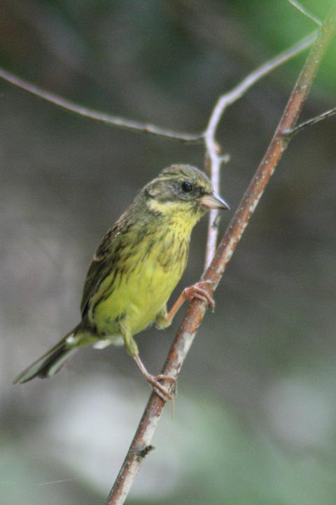aoji-bird-01.jpg