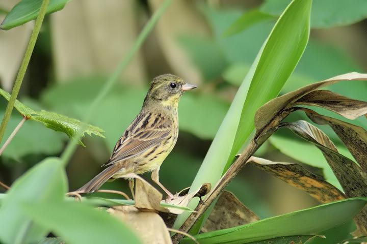 bird-05-s.jpg