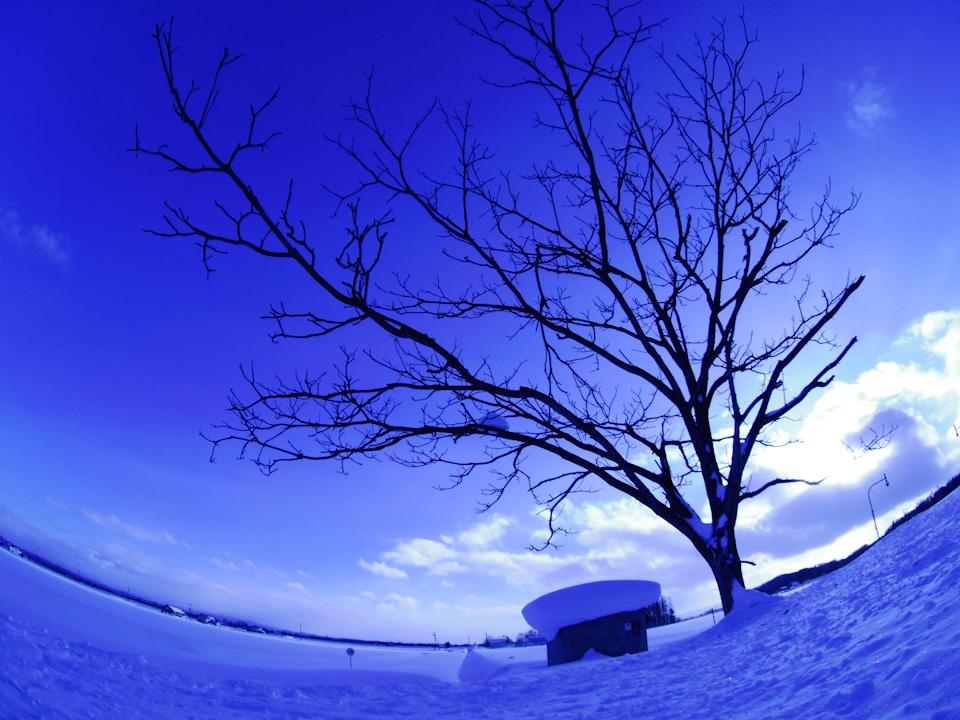 blue-snow.jpg