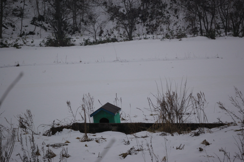 dog-house-houchi-s.jpg