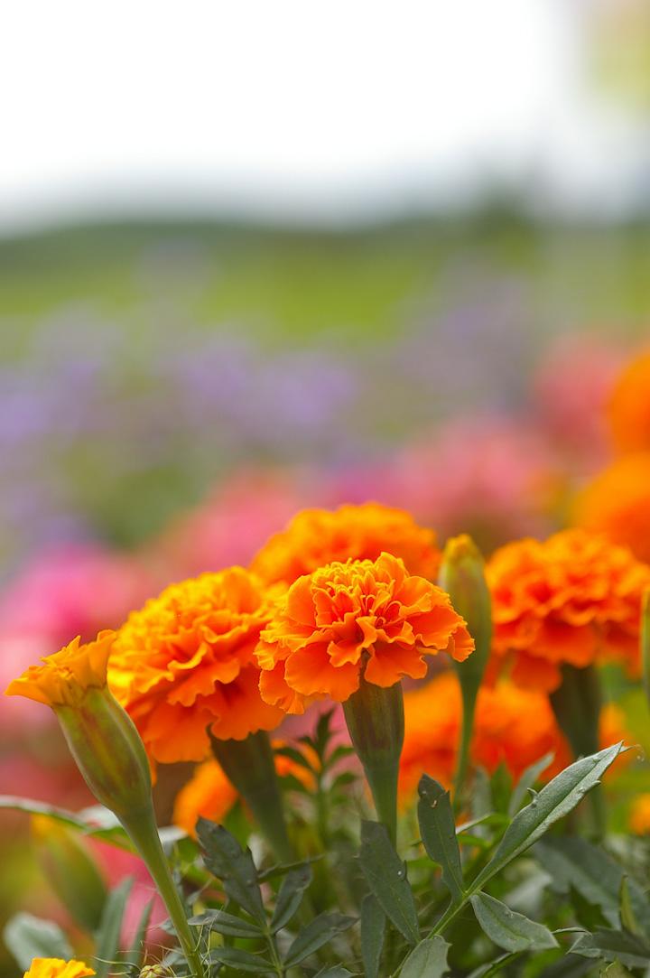 flower-s.jpg