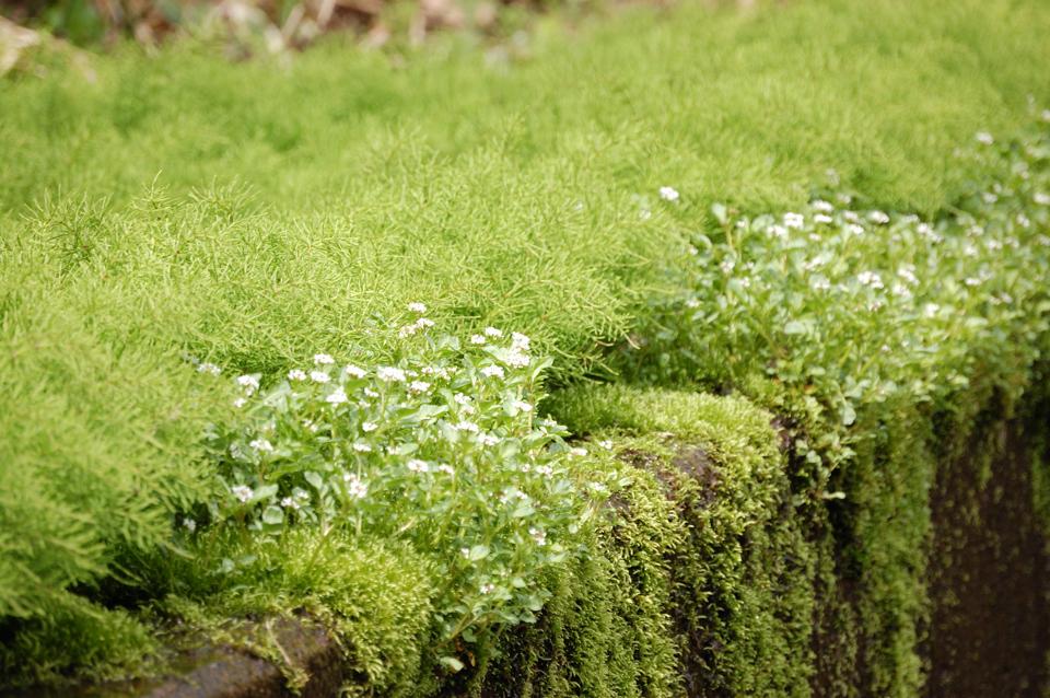 green-suiro-s.jpg