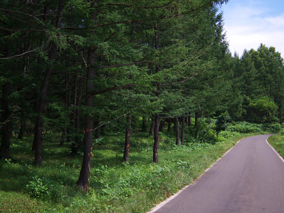 road-summer-001.jpg