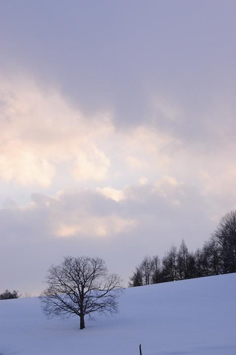 snow-tree-s.jpg