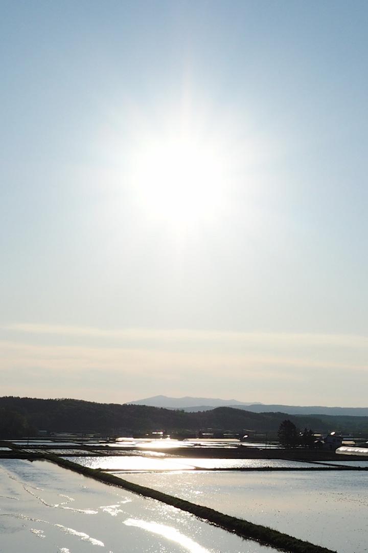 sun3005.jpg