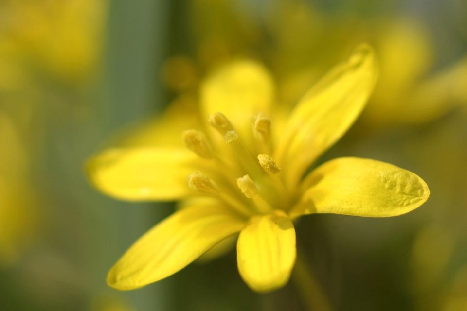 yellow-flower-macro-s.jpg