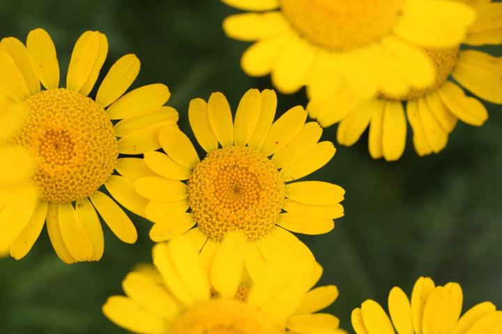 yellow-s.jpg